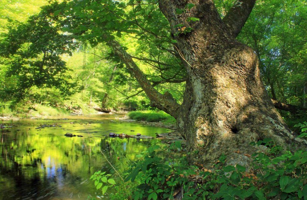 forêt a bois