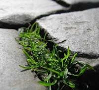 dalles pour allées de jardin