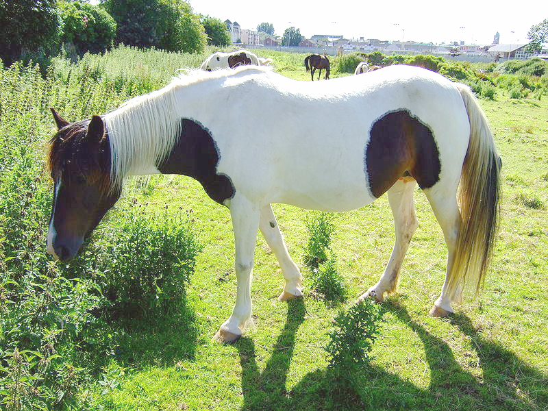 chevaux a donner